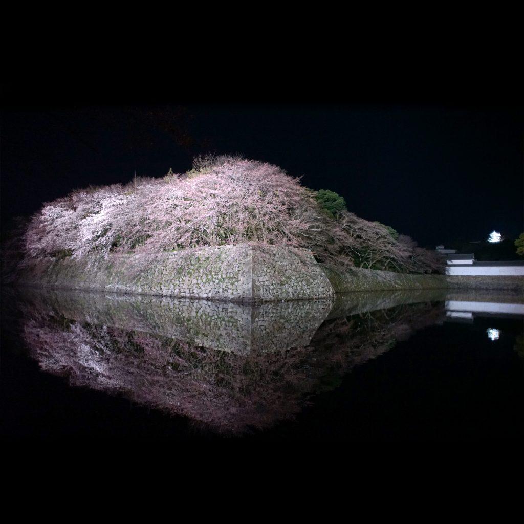 三分咲きの彦根城の桜