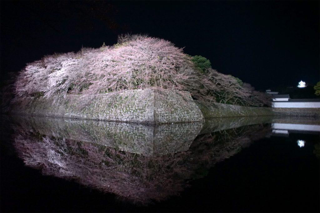 ライトアップされた彦根城と桜のお堀
