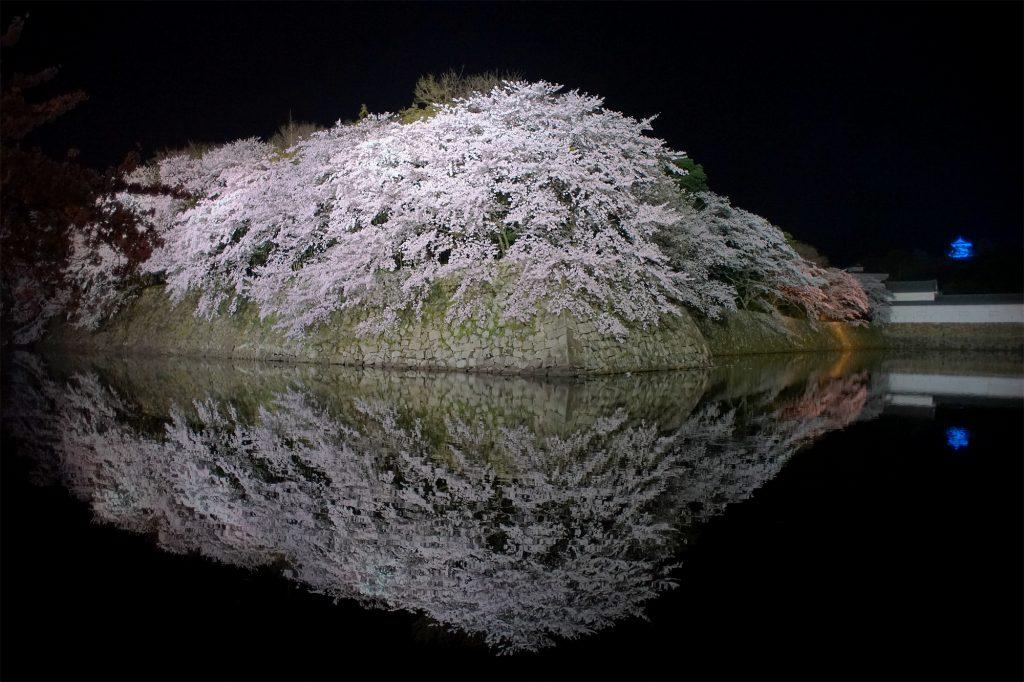 ブルーライトアップの彦根城とお堀の桜