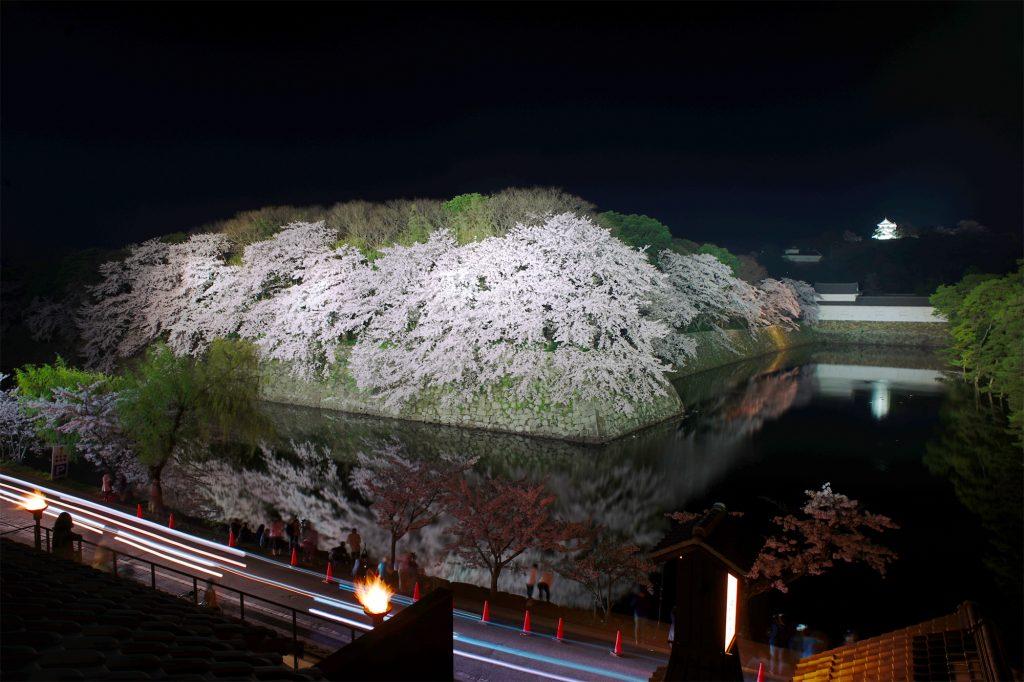 彦根城とお堀の桜