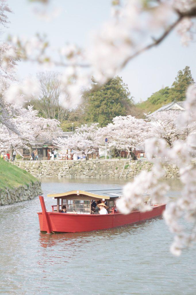 屋形船と桜