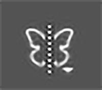 蝶々みたい