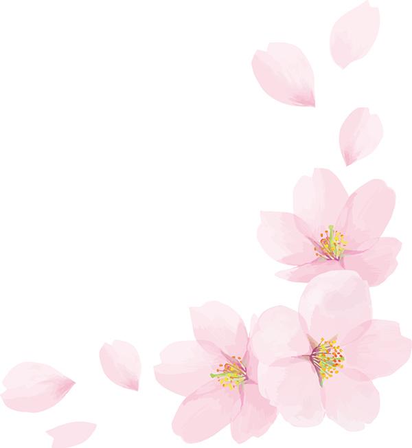 桜の花びら元画像